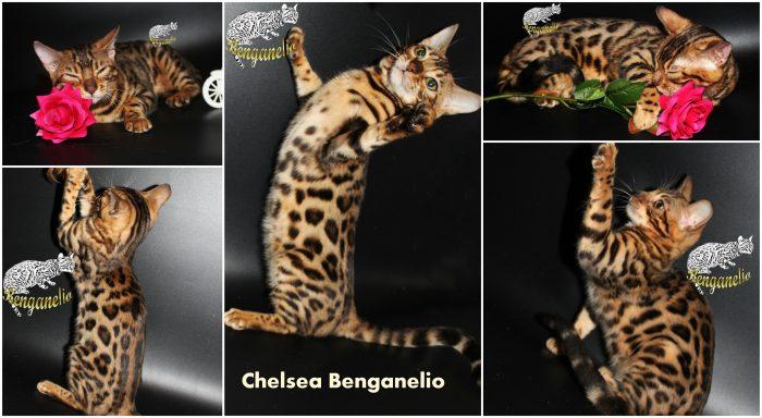 Chelsea Benganelio