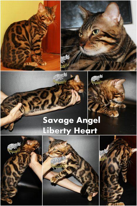 Savage Angel Liberty Heart