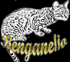 Wild Benganelio